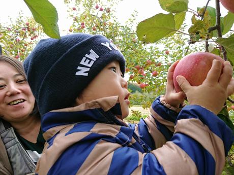 りんごを掴むシマシマの男の子)