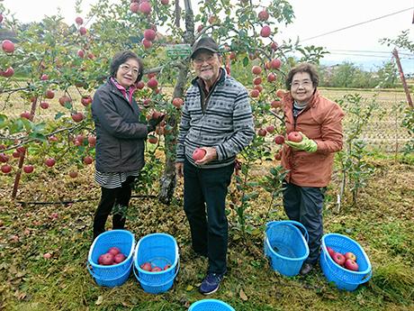 三人のリンゴ狩り