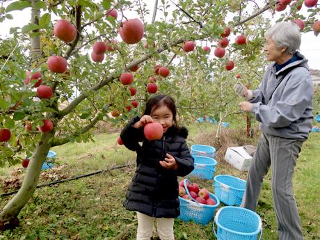 りんごの木オーナー収穫祭2019